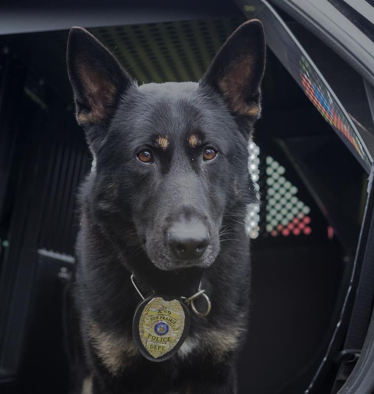 K9 Lasko, photo credit: Bruce Faanes Photography