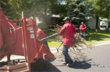 City employees use a brush chipper